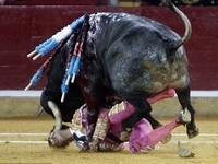 「我看不見!」鬥牛士被牛鬥 牛角下巴刺入貫穿眼睛