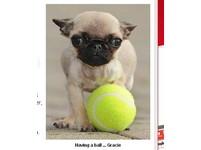 世界最迷你的狗 僅15公分、0.6公斤