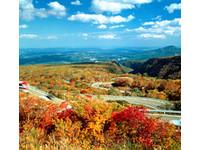 萬張免費機票大放送 明年遊日本搶先機