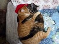 睡姿像「麻花捲」 貓情侶緊緊熊抱不分離