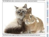 攝影師拍「毛茸茸寫真」 記錄小動物們的自然互動
