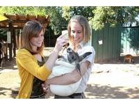 餵袋鼠寶寶喝果汁 美動物園讓遊客體驗當袋鼠媽媽