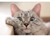 貓界表情帝Nala教「喵星球哲學」 地球貓奴:頓悟了!