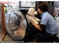 讓牠的晚年有尊嚴! 看日本寵物護理中心的人文關懷