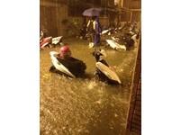 快訊/中原大學附近水淹及膝 機車恐怕凶多吉少