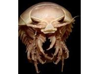 《大白鯊》翻版 「深海異形蟲」攻擊人類觀測站!