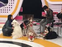 「哈Dog Life」5犬到ETtoday樓上錄影。(圖/記者田暐瑋攝)