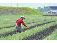 強烈冷氣團襲台 中市農業局:水稻育苗場應設置防風牆