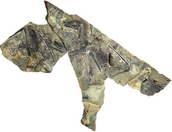 Pin It ← 即時+好看!按讚加入ETtoday新聞雲 大陸發現新物種! 1.6億年前「奇翼
