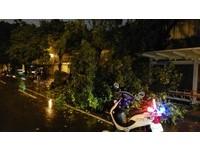 快訊/強降雨北市釀首災 重慶南路樹倒壓傷女騎士