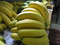 「香蕉愛滋病」蔓延!全球85%香蕉面臨毀滅危機