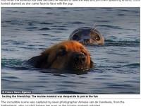 巧遇的友情! 狗狗和海豹共遊大海