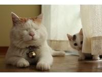 小貓「咪咪」超調皮 把貓叔尾巴當成逗貓棒