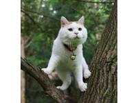 「貓叔」要登大螢幕! 將化身15位漂流少年之一