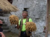 金黃小米文化祭 在地文化結合觀光