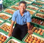 商周/標準化作業 賣出芒果國際競爭力