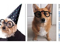 哈利波特有狗狗版 「神秘的魔法狗骨頭」來了!