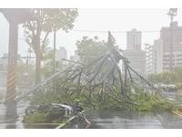 今年西北太平洋颱風靜悄悄? 主因跟「超級聖嬰」有關