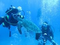 禁捕區退3海裡 小琉球綠蠵龜近人10米,還愛跟人玩親親