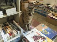 大台北閱讀之旅 4家必去獨立書店感受台灣人文氣息