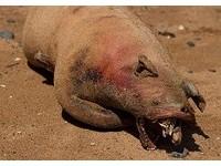 地獄怪獸重返人間? 「豬鼠同體屍」現紐約河岸