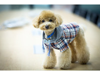 喜歡幫狗狗穿衣服? 獸醫警告:別亂穿...恐導致皮膚病
