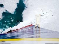 「不要摧毀我的家」 北極熊徒手擋破冰船