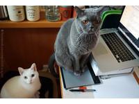 根本句句智慧指引!唐立淇星座運勢超命中「貓與貓奴」