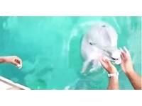 已融化!美女手機落海 海豚竟潛水尋找並帥氣叼回來