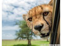 首屆野生動物喜劇攝影獎入圍作品。(圖/AwardsMercury Press/東方IC)