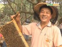 清理腸道宿便!多喝蜂蜜水輕鬆「通樂」