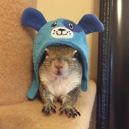 颱風天救了一隻鼠太后?!松鼠Jill的幸福日常  原文網址: ...