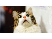 貓咪的左右撇子原因是?你不知道的8個貓咪小知識