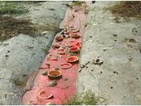 上百顆「瓜頭」落地汁流成河 網友:這一定是預謀!