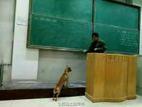 「學霸狗」亂入高等數學課 上台請教問題反被教授催眠