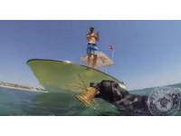 黑拉拉最喜歡和主人「出海」 跳下水馬上抓到大龍蝦