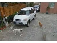 無聊用Google街景搜家地址 驚見過世「拉拉」活潑身影