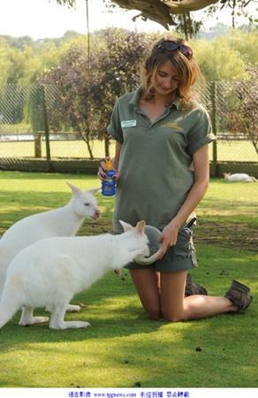 白化症袋鼠超可爱 模样貌似 放大版白兔