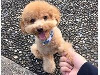 汪星人更喜歡媽媽? 研究:狗狗知道誰是「好人」!
