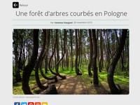 波蘭出現神奇「歪森林」 UFO失事或魔法磁場導致?