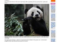 熊貓當招財貓?陸出借「陽光」和「甜甜」赴英定居十年