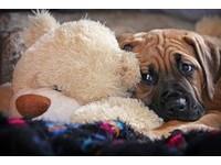 驚!狗飼料檢出偏高防腐劑 無法可管寵物吃的心驚驚