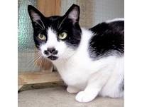 英發現神秘流浪猫 晶片顯示曾環遊世界!