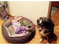 看看你的小孩!愛睏狗狗斜眼怒瞪:把這兩隻給我移走