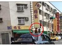 男開車逼紅貴賓「坐車頂」超危險! 網怒:叫他坐看看