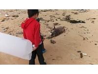 海豚嘴纏漁網死在垃圾沙灘 漫畫小隊長:孩子都沉默了
