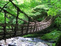 祖谷溪切割出的日本絕美秘境 難得一見藤本植物橋
