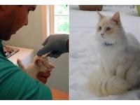 病重動不了...貓咪在樹叢哭哭得救 1年後變成白色雪精靈