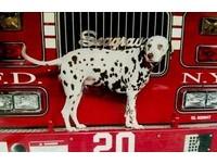 消防夥伴!15歲大麥町撫平911傷痛 天堂出最後任務