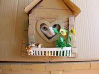 認真魔人!插畫家幫貓做「紙箱別墅」 不怕被「都更」